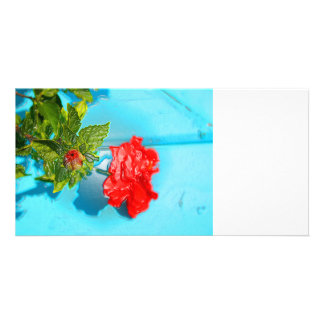 red rose against blue plastic wrap style custom photo card