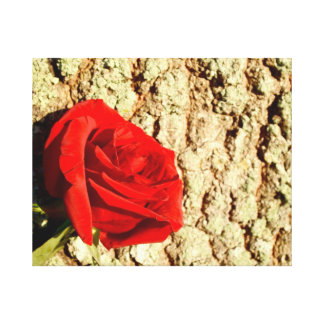 Red Rose against oak tree bark image Gallery Wrapped Canvas