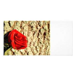 Red Rose against oak tree bark image Photo Card Template