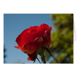 Red Rose All Occasion Greeting Card