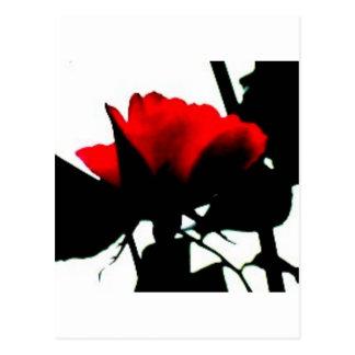 Red rose and black stem postcard