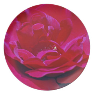 Red rose and its meaning party plate