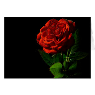 Red rose and love card