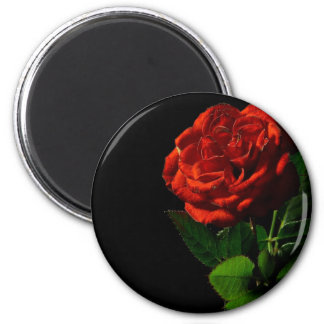 Red rose and love magnets