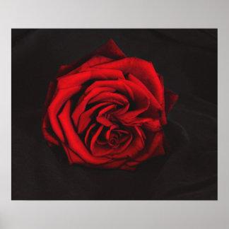 Red Rose art poster