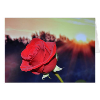 red rose beautiful image card