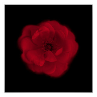 Red Rose. Black Background. Posters