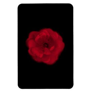 Red Rose. Black Background. Rectangle Magnet