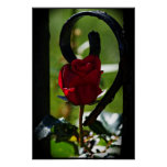 Red rose black fence posters