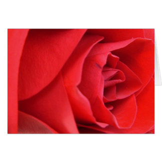 Red Rose Blank Note Cards
