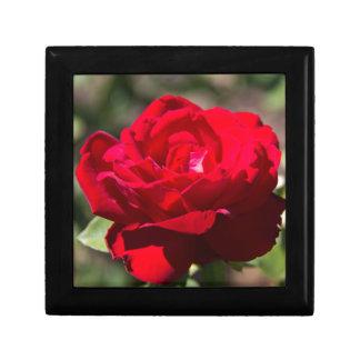 Red Rose Blossom Gift Box