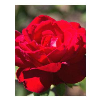 Red Rose Blossom Letterhead
