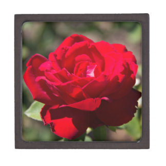 Red Rose Blossom Premium Keepsake Box