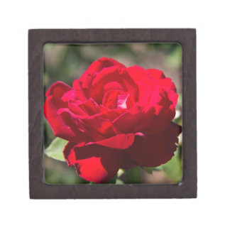 Red Rose Blossom Premium Trinket Boxes