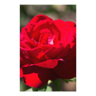Red Rose Blossom Stationery Design