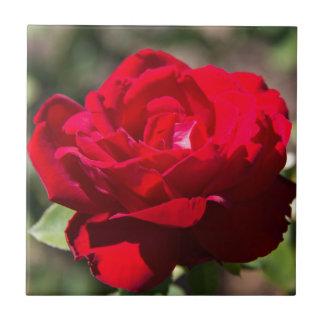 Red Rose Blossom Tiles