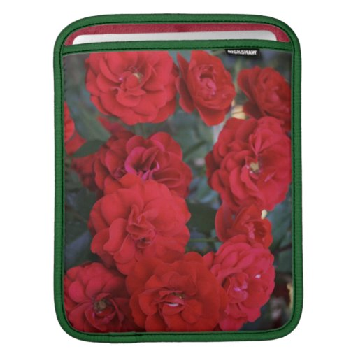 Red Rose Blossoms - flower photography Sleeves For iPads