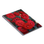 Red Rose Blossoms - flower photography Note Books