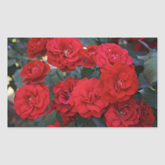 Red Rose Blossoms - flower photography Stickers