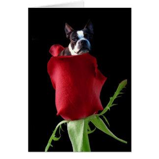 Red rose Boston Terrier greeting card