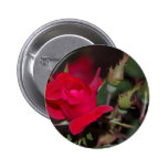 Red Rose Bud Buttons