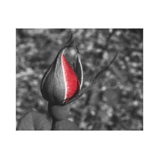 Red Rose Bud Canvas