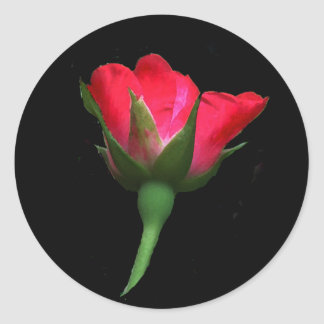 Red Rose Bud Classic Round Sticker