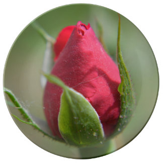 Red Rose Bud Decorative Plate