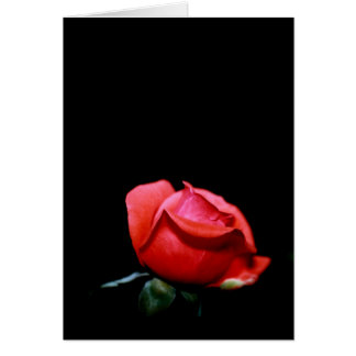 Red Rose Bud Isolated on Black Background Greeting Card