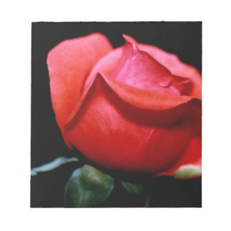 Red Rose Bud Isolated on Black Background Memo Notepad