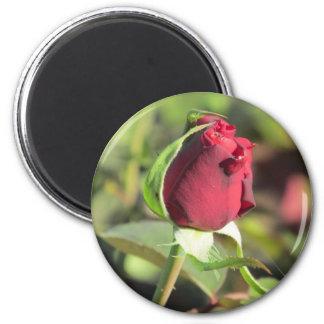 Red Rose Bud Magnet
