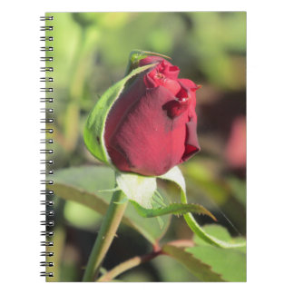 Red Rose Bud Notebook