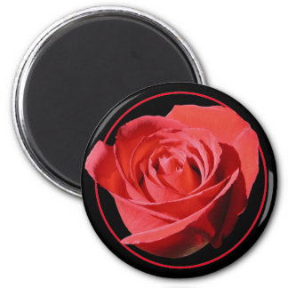 Red Rose Close Lone Magnet