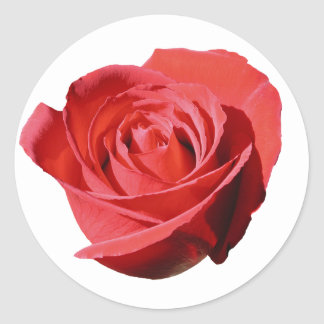 Red Rose Close Lone Sticker