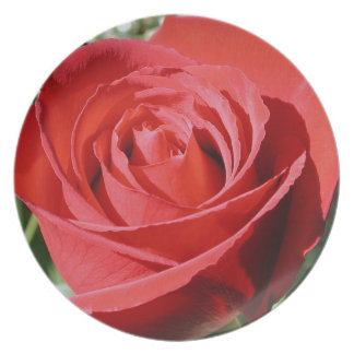 Red Rose Close Plate