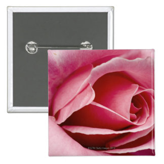 Red rose close up pinback button