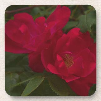 Red Rose Cork Coaster