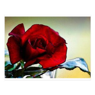 red rose cyprus postcard