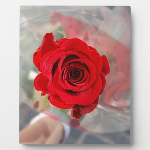 Red Rose Display Plaques