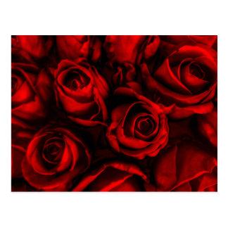 Red Rose Elegance Postcard