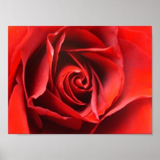 Red Rose Elegance Poster