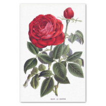 """Red Rose Floral 10"""" X 15"""" Tissue Paper"""