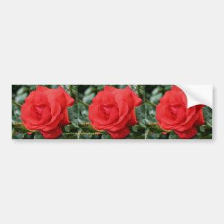 Red Rose Flower Bumper Sticker Car Art Car Bumper Sticker