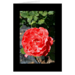 Red Rose Flower Greeting Card and Note Card
