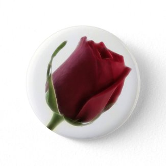 Red Rose Flower on White button