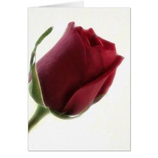 Red Rose Flower on White card