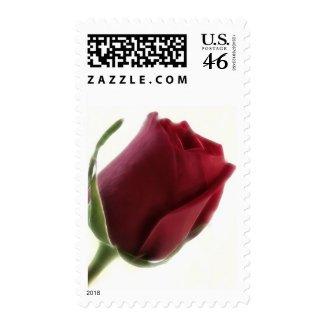 Red Rose Flower on White stamp