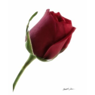 Red Rose Flower on White shirt