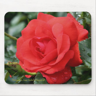 Red Rose Flower Photography Mousepad