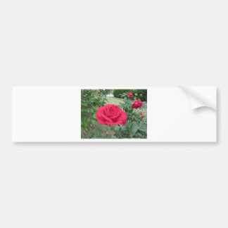 Red rose flowers with water droplets in spring bumper sticker